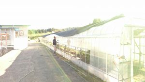 柿を干す場所を
