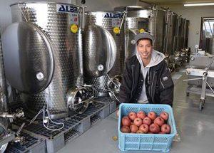 若手就農者が廃果リンゴでシードル 果実酒特区の下條村で