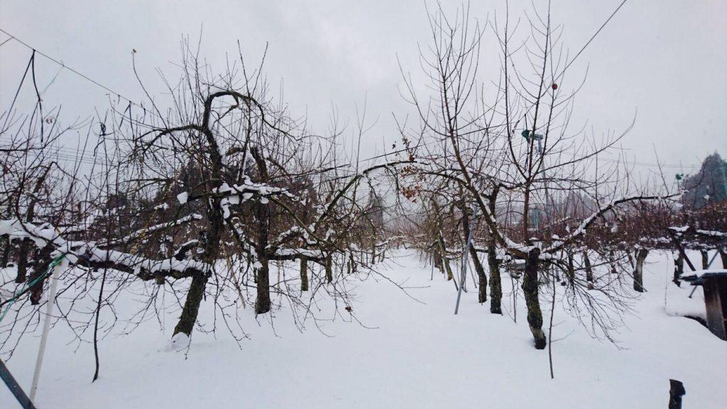 醸造所の外は、こーんな雪景色。